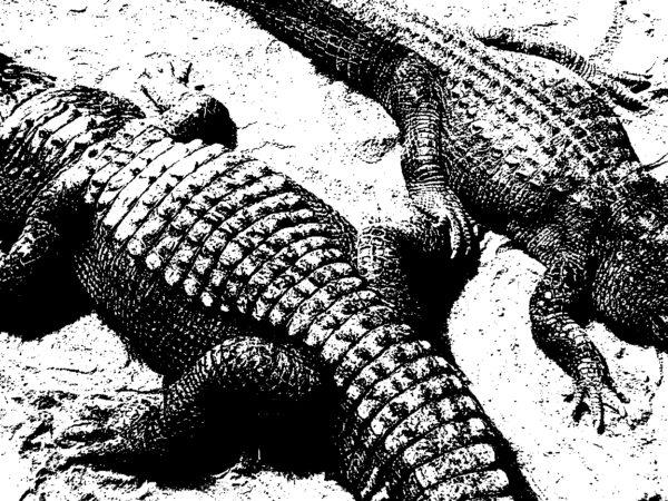 gators_b&w