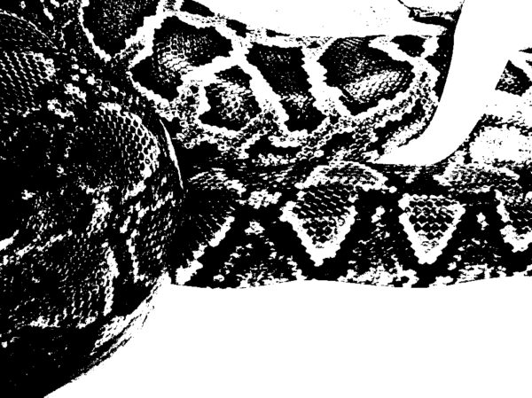 serpents_b&w_2