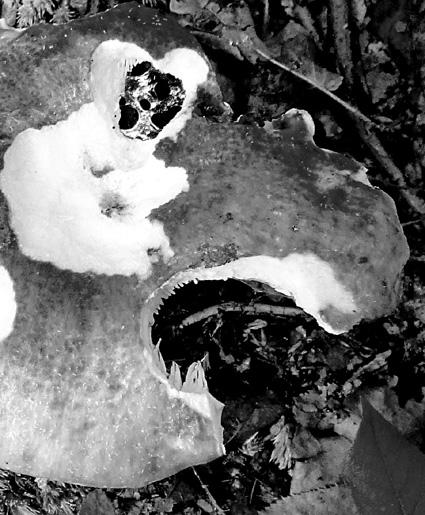 mushroom beast