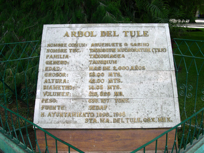 Tule tree plaque