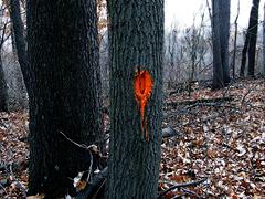 tree with oragane blaze