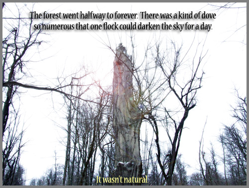 Poem: 'The forest went halfway to forever. There was a kind of dove so numerous that one flock could darken the sky for a day. It wasn't natural.'
