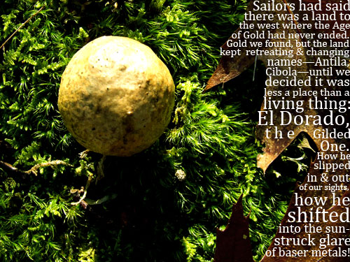 photo of an oak apple gall with a poem about El Dorado