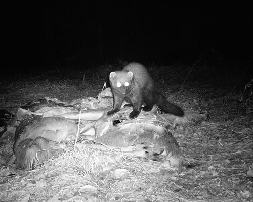 fisher at bait pile 2