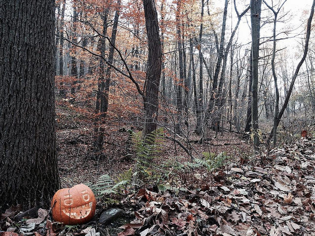An aging jack o'lantern with a big grin at the base of a large tree out in the woods.