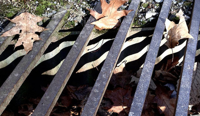 Leaves trapped in steel grating in a culvert covering.